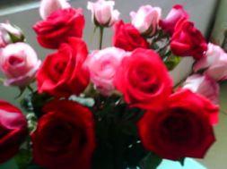 雪舞&玫瑰情深家族