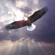 ︶﹌⋛⊱鹰⊰⋚﹌︶