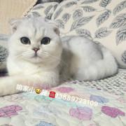 猫咪成长日记