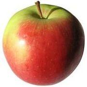 ╬╬~酱油家苹果╬╬