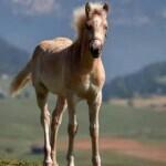 一匹-野马