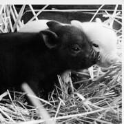 猪猪猪猪猪猪猪猪猪~
