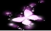 沈阳紫晶家族
